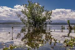 Refrescándose en el pantano... (Javier Arcilla) Tags: arbol naturaleza agua airelibre pantano barcena ponferrada elbierzo leon castillayleon españa pentax pentaxk70 k7 pentax1855mm cielo azul nubes hdr