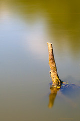 Sticking out (cstevens2) Tags: fortvanliezele puurs boomstronk branch fortengordelrondantwerpen gracht langesluitertijd longexposure nature natuur tak treetrunk water