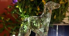 Greyhound (Retro Photo International) Tags: crystal greyhound dog flowers aerogarden silver helios 44 m39 violas