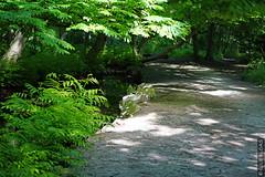 DSC01066 (g.lebloas) Tags: forêt bois arbre eau