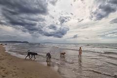 la spiaggia dei cani (mat56.) Tags: panorama landscapes landscape paesaggi paesaggio spiaggia beach cani dog cane dogs mare sea sanvincenzo livorno toscana tuscany bambina bimba child cielo sky nuvole clouds nubi acqua water antonio romei mat56