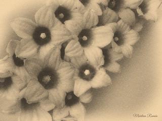 Camino de flores.