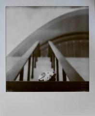to the stars (Polar Noire) Tags: berlin modernarchitecture polaroid sx70 impossiblefilm instant instantfilm skull deer djur reh ufo stairs polarnoire