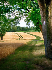 Byway (BeMo52) Tags: tree baum landscape heath heide kornfeld way weg bäume trees fields