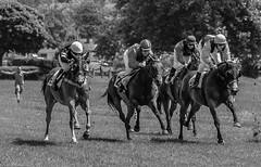 "wait for me - ""ja wo laufen sie denn""? (°°°°°°°°°°°) Tags: pferderennen pferde horses horseracing"
