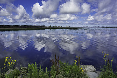 Used to resemble a canal... (TAC.Photography) Tags: 2018yip reflection reflections reflectioninwater saginawbay yellowwildweeds landscape clouds skyscape landscapephotography tomclarknet tacphotography