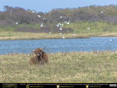 Buffalo (andrewtijou) Tags: andrewtijou nikond7200 europe france fr nordpasdecalais gravelines calais buffalo