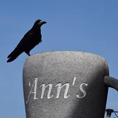 Chez Ann (jpdu12) Tags: irlande irela howth forcedperspective flickrfriday bird oiseau d5300 nikon jpdu12