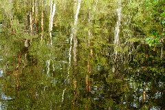 Lake Orajärvi (Nuuksio national park, Espoo, 20180623) (RainoL) Tags: crainolampinen 2018 201806 20180623 esbo espoo finland geo:lat=6030299594 geo:lon=2458963051 geotagged june lake midsummerday nationalpark nature nouxnationalpark nuuksionationalpark nuuksionkansallispuisto nyland orajärvi p900 reflection summer uusimaa water waterscape velskola vällskog fin