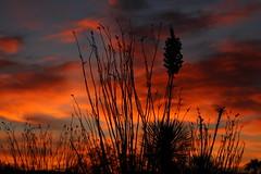 Sunrise 5 31 18 #08 (Az Skies Photography) Tags: sun rise sunrise morning dawn daybreak cloud clouds sky skyline skyscape rio rico arizona az riorico rioricoaz arizonasky arizonaskyline arizonaskyscape arizonasunrise may 31 2018 may312018 53118 5312018 canon eos 80d canoneos80d eos80d canon80d red orange yellow gold golden salmon black