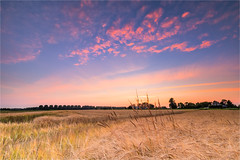 Goal! (karindebruin) Tags: hellevoetsluis nederland thenetherlands voorneputten zonsondergang zuidholland polder sunset crop gewas kleuren colors