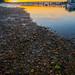 River Adur Sunset
