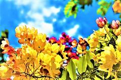 Flower arrangement (thomasgorman1) Tags: leaves flowers downtown kaunakakai molokai island nikon colorized colors processed nature flower arrangement