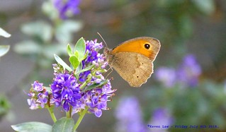 Just Fluttering by.......