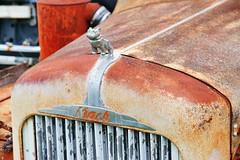 Mack B61 Truck in Bushnell FL 3.6.2018 0818 (orangevolvobusdriver4u) Tags: bushnell florida usa 2018 archiv2018 truck lkw lastwagen mack b61 mackb61 rusty rost detail logo badge brand zeichen bushnellflorida fl kühlerfigur hoodornament