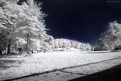 Dreamscapes (HiJinKs Media...) Tags: infrared dream dreamscape nikon shadows surreal longexposure abstractlife angles trees grass