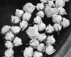 Roses in Fountain, San Miguel de Allende (Paul DeDomenico) Tags: sanmigueldeallende mexico flowers film fountain nikon n80 2880 roses water