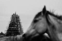Hampi | 2017. (Vijayaraj PS) Tags: india asia incredibleindia outdoor animal 2017 animals monochrome rock sky iamnikon travel horse temple bokeh virupaksha