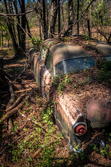 Turn To Light (Wayne Stadler Photography) Tags: preserved overgrown retro vintage rustographer ford abandoned classic derelict vehiclesrust rusty rustography junkyard oldcarcity georgia automotive white