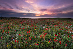 Dignified Approach (b.pedlar) Tags: cornwall landscape sea sunset goingdownofthesun armistice moved poignant flowers crantock westpentire poppies war nationaltrust value respectful traditional