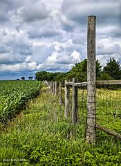 Blue skies On the Horizon    ...HFF! (jackalope22) Tags: hff blue sky clouds vanishing point fence friday