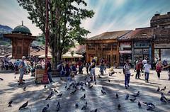 Feeding the Pigeons (Jocelyn777) Tags: people birds pigeons pigeonsquare bascarsija sarajevo bosniaandherzegovina balkans travel architecture buildings monuments historictowns historiccitycentres textured