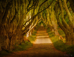 Dark Hedges of Ireland (Dick Shaffer) Tags: trees tree road ireland lane mysterious hdr texture moody irish flickrtravelaward grass forest golden green journey trail avenue overgrown verge yellow horizon channel entry path