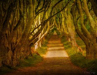 The Dark Hedges of Ireland