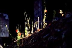 Verneil le Chétif (Sarthe) (gondardphilippe) Tags: verneillechétif sarthe maine paysdelaloire clairobscur plante sombre vert green rouge red mur wall bleu blue campagne couleurs colors extérieur outdoor fleur flower loir nature ombre quiet rural texture zen