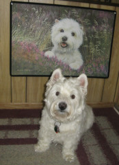 "7/12A ~ Riley - ""Two Cuties"" (ellenc995) Tags: riley westhighlandwhiteterrier 12monthsfordogs18 mat cute westie thesunshinegroup coth alittlebeauty fantasticnature coth5 thegalaxy challengeclub 100commentgroup"