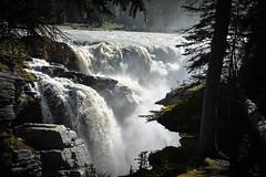 West Canada (elinevdven) Tags: canada westcanada british columbia alberta travel nature athabasca falls