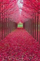 Forêt nature3 (CISSÉO) Tags: forêt arbres bois nature rouge