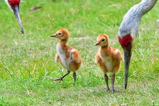 The Crane Family