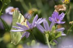 DN9A4598 (Josette Veltman) Tags: garden tuin tuinfoto groen natuur nature garten jardin flowers bloemen