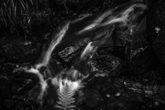 "fine art black & white, moody capture of a fern overhanging a bonsai set of falls set to join the Falls of Bruar, Perth & Kinross, Scotland, UK (grumpybaldprof) Tags: ""perthandkinross"" pitlochry"" atholl"" ""robertburns"" ""dukeofatholl"" scotland uk ""fallsofbruar"" ""bruarwater"" waterfalls bridges ""glengarry"" ""lowerbridge"" ""upperbridge"" ""naturalarch"" trees forest paths walks water rocks stones arch path canon 7d ""canon7d"" tamron 16300 16300mm ""tamron16300mmf3563diiivcpzdb016"" bonsailandscape bw blackwhite ""blackwhite"" ""blackandwhite"" noireetblanc monochrome ""fineart"" ethereal striking artistic interpretation impressionist stylistic style contrast shadow bright dark black white ""longexposure"" fern leaf"