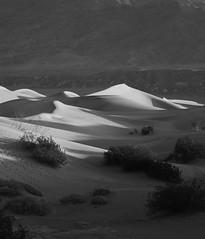 Curvaceousness (gpa.1001) Tags: deathvalley california mesquitedunes sanddunes blackandwhite bw