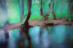 Beech forest of spring water and fog (chikaraamano) Tags: springwater beech fog flow stream forest mountain earlysummer tree beauty lovely green white blue nature healed outdoor akitaprefecture japan
