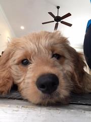 Ella's adorable boy Teddy!