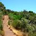 Mt. Umunhum Trail (2)