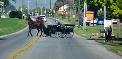 horse and wagon (bluebird87) Tags: horse wagon amish women nikon d7200