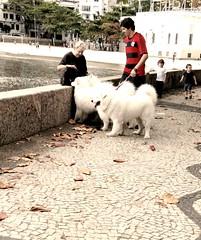 amizade (luyunes) Tags: cachorro amizade gente urca riodejaneiro cidademaravilhosa beleza streetscene streetphotography streetphoto streetshot mobilephotographie mobilephoto luciayunes motozplay
