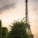Sapin et tour Eiffel
