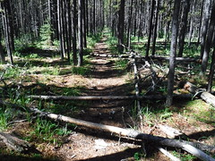 Time to stop for a bite to eat. (davebloggs007) Tags: hiking mountains alberta canada kananaskis 2018