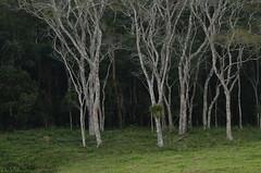 Formas e texturas (Márcia Valle) Tags: piau roça minasgerais brasil brazil márciavalle nikon d5100 inverno winter invernotropical texturas trees árvores