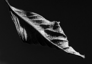Leaf - light and shade