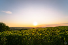 Collines du Layon (PaaulDvD) Tags: chalonnes loire layon loirevalley sunset vigne wine vin colors blue sun unesco