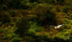 First Wildlife Photograph (Jansha Crazy) Tags: