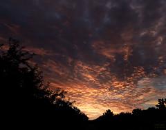 Day 238 | Morning Glory