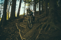 Along the slope (Serbian Dictator) Tags: mountains trails extreme roots speed slope mtb bike shadow sony a6000 specialized demo ride trailriding dh downhill