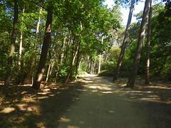spazieren durch den Dünenwald (Sophia-Fatima) Tags: stpeterording eiderstedt nordfriesland schleswigholstein deutschland kurgebiet wald wood way weg